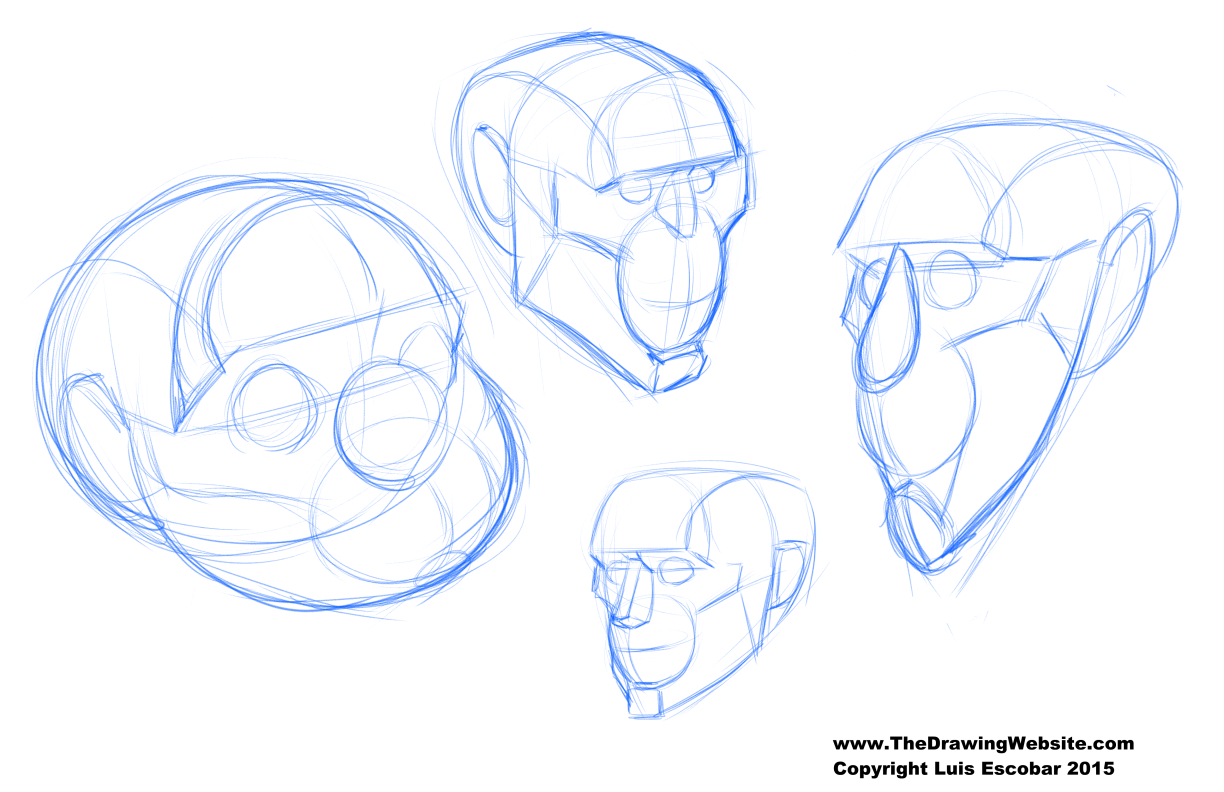 Head construction from compound shapes