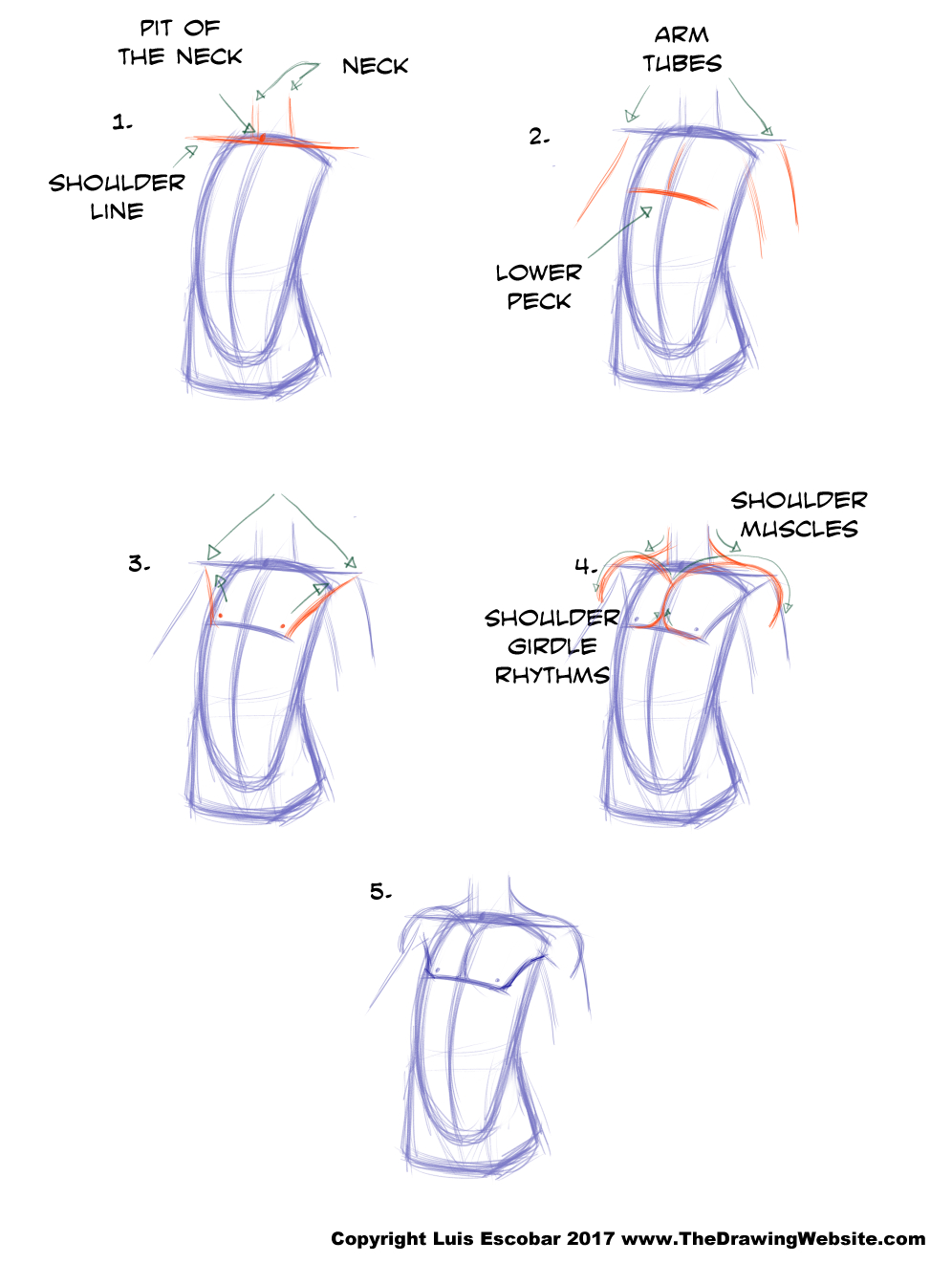 But What If You Want To Draw A Female Chest Area? Well, It's Pretty Much  The Same Thing With Some Slight Adjustments: