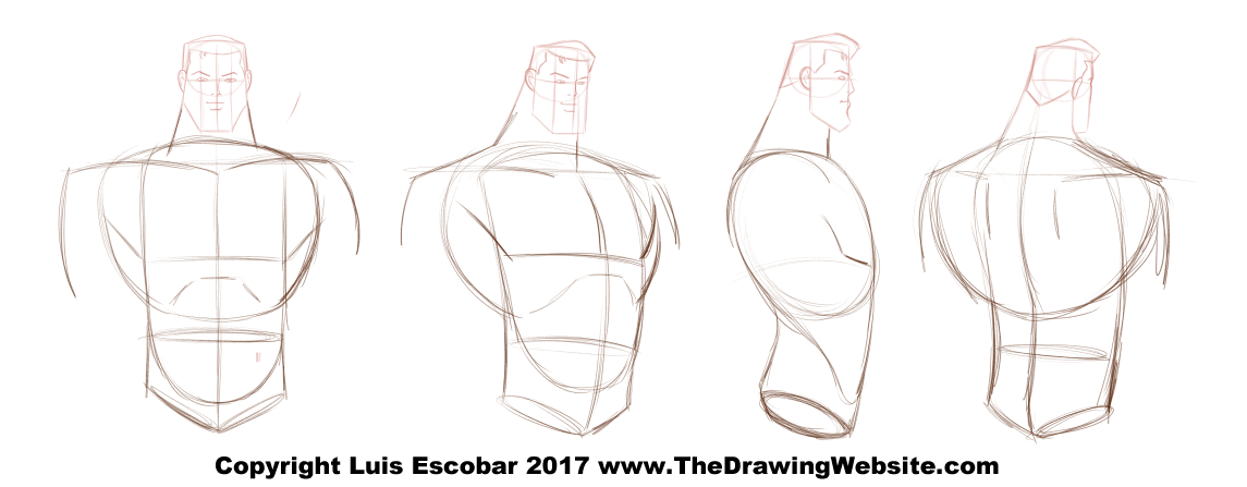 Bruce Timm Style Male Torso Turn Around The Drawing Website